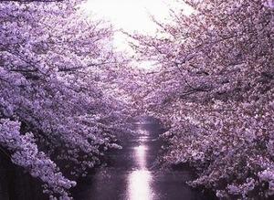 目黒川.jpg