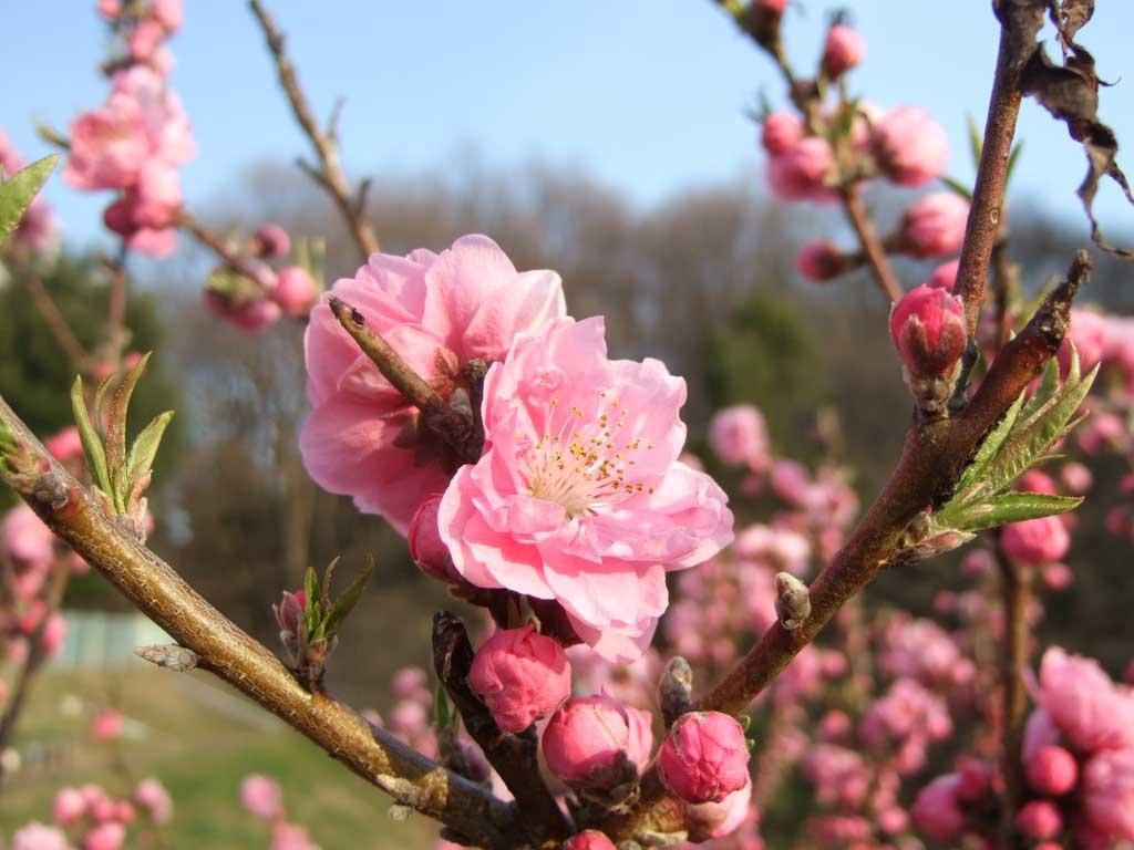 http://www.neotrans.jp/newsblog/momo3.jpg